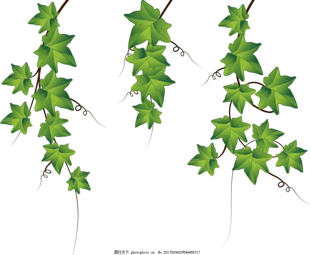 爬山虎 藤蔓 花边 绿叶 绿叶花边 装饰花边 树叶 植物 树叶素材