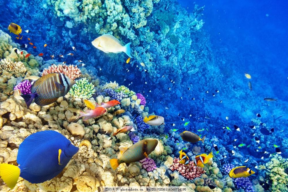 蓝色海洋风景鱼群 蓝色海洋风景鱼群图片素材 瑚珊 海底鱼类动物