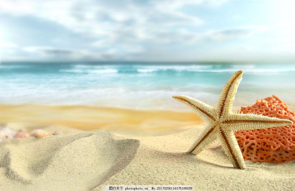 沙子海星大海图片素材 海星 贝壳 海螺 海洋生物 沙滩 海滩 沙子 夏日
