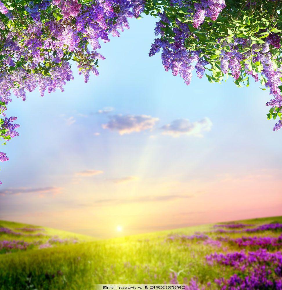 日出与春天景色 日出与春天景色图片素材 春天鲜花风景 草地 美丽花朵