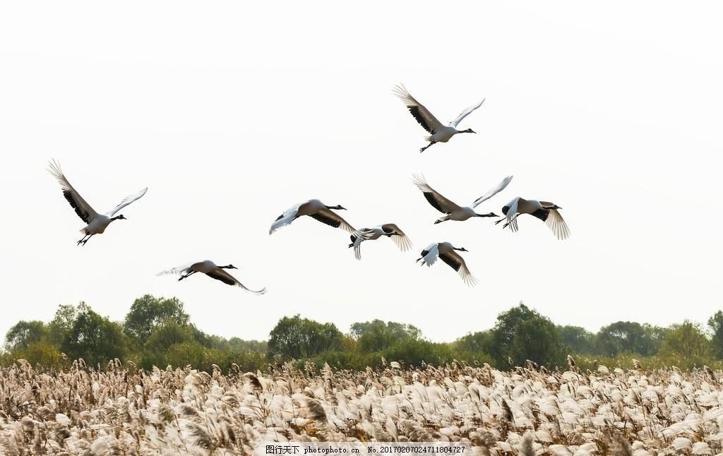 壁纸 动物 鸟 鸟类 摄影 桌面 1024_646