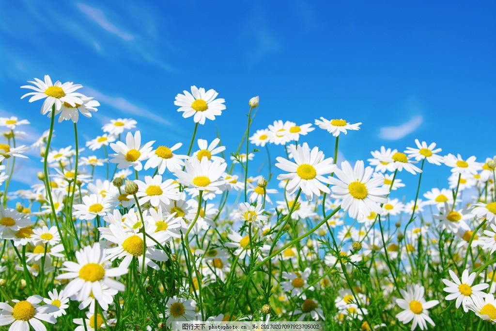 太阳花花卉背景墙 高清大图 空间建筑 装饰设计 风景 高分辨率图片