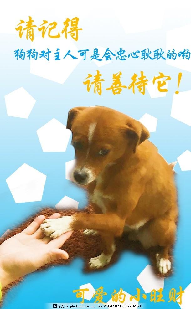 宠物狗狗公益海报