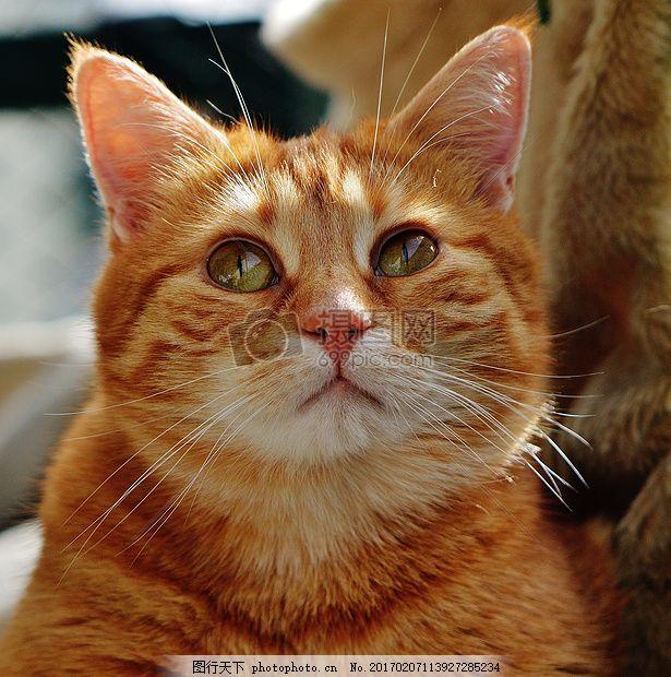 楚楚可怜的小猫 红色 可爱 鲭鱼 动物 毛皮 可怜 小猫 猫耳朵     jpg