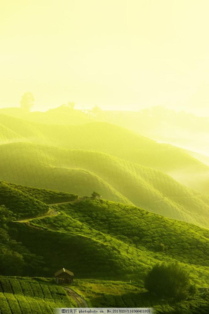 设计图库 高清素材 自然风景  茶园 亭子 高山图片素材 茶园 茶山