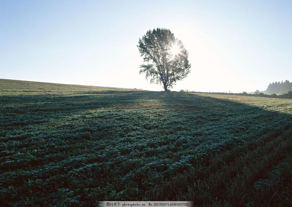 田园风景摄影图片素材 四季风景 美丽风景 美景 自然景色 树木 田园