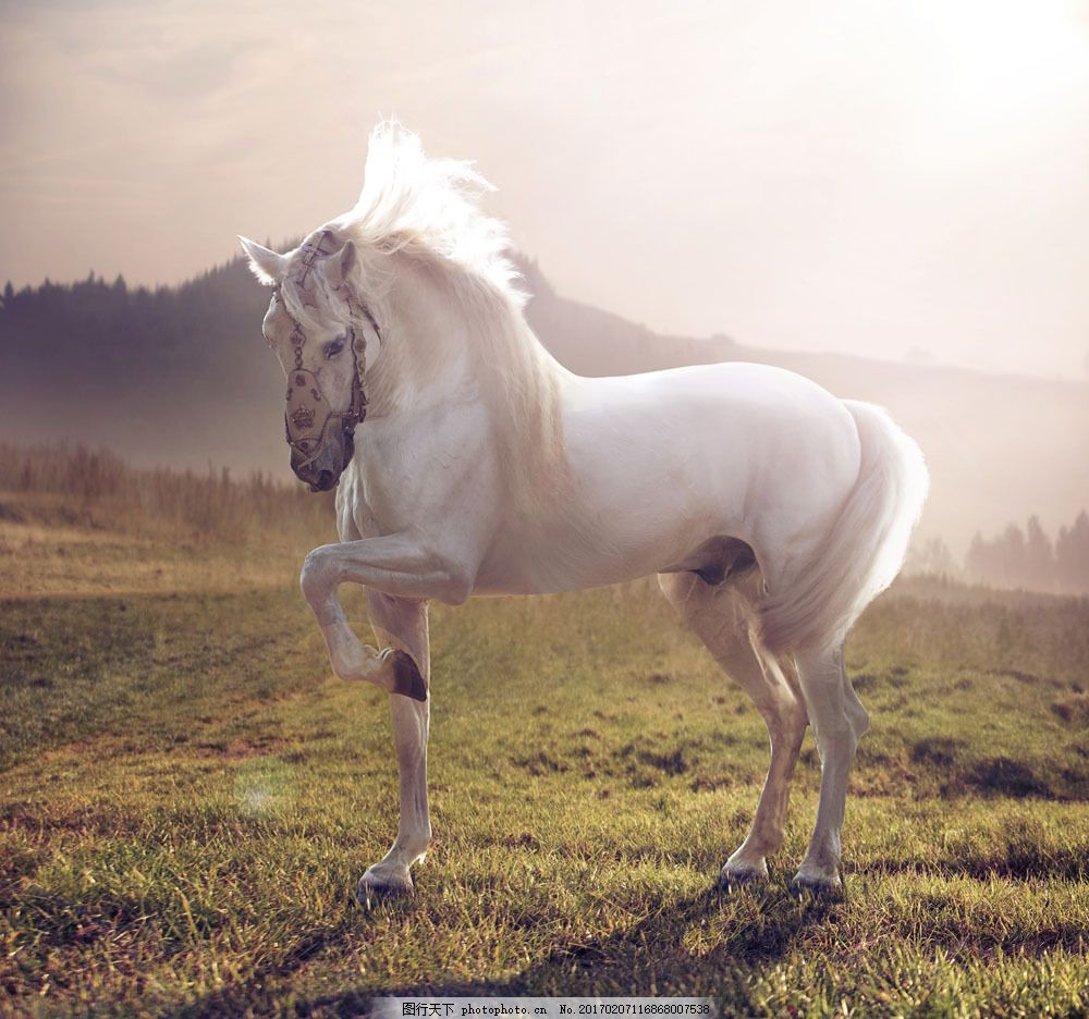 草地上的白马 草地上的白马图片素材 动物 陆地动物 生物世界