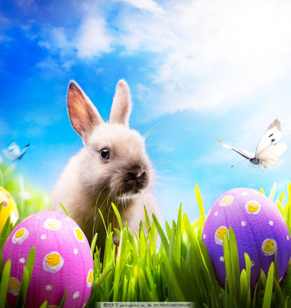 复活节彩蛋与可爱兔子图片