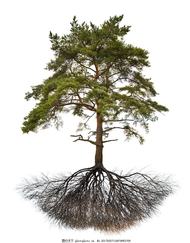 密集的树根大树图片