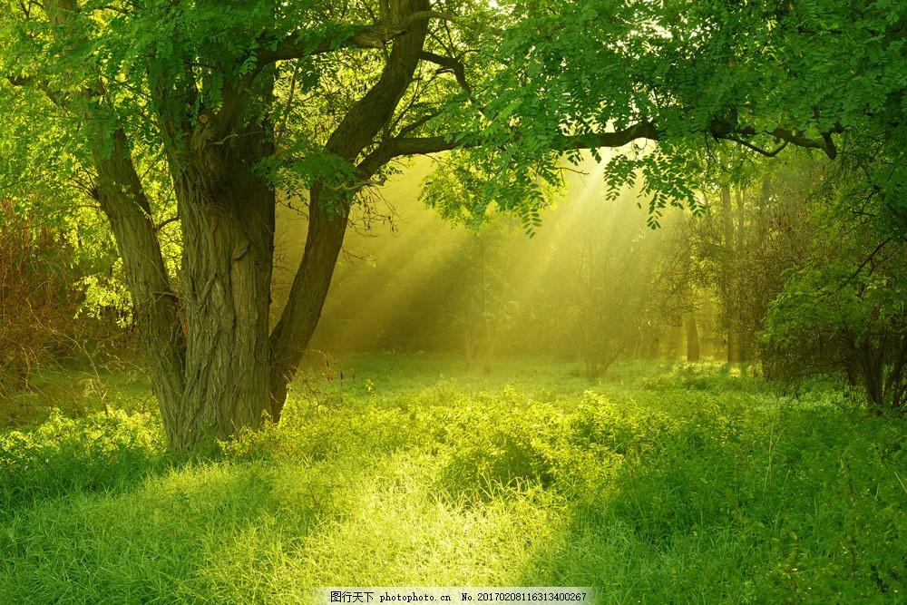 草地大树背景 草地大树背景图片素材 树木 阳光 自然风光 风景