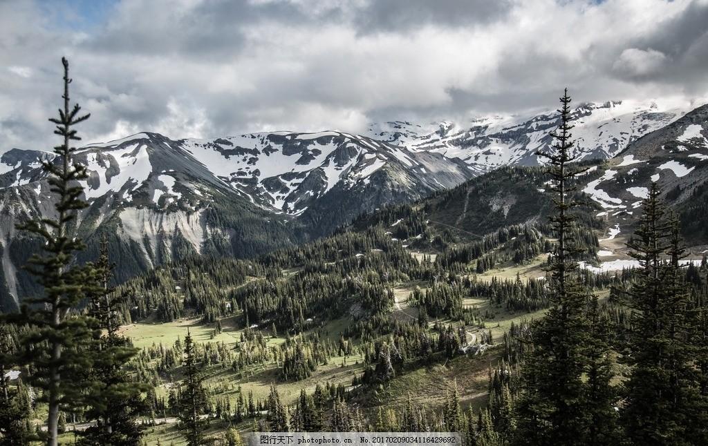 松树林 森林 雪山背景 蓝天 白云 风景 摄影