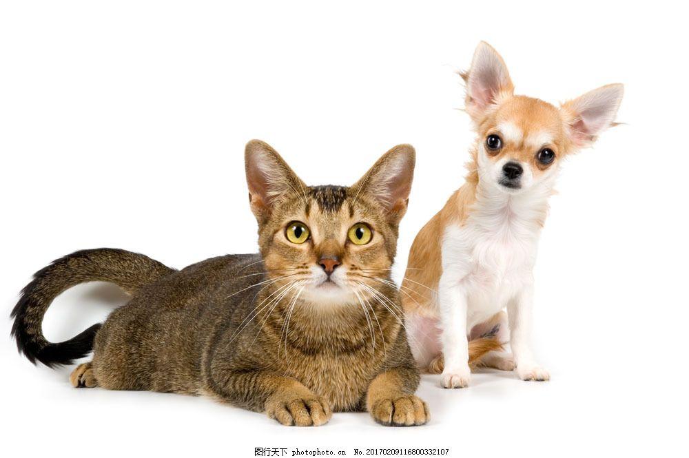 可爱宠物猫狗图片