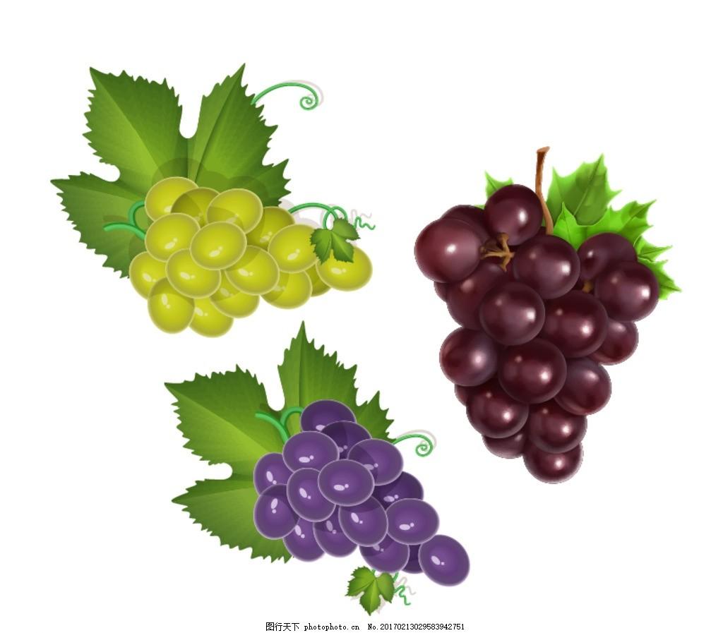矢量 水果素材 新鲜水果 矢量水果 写实水果 葡萄 紫葡萄 葡萄素材