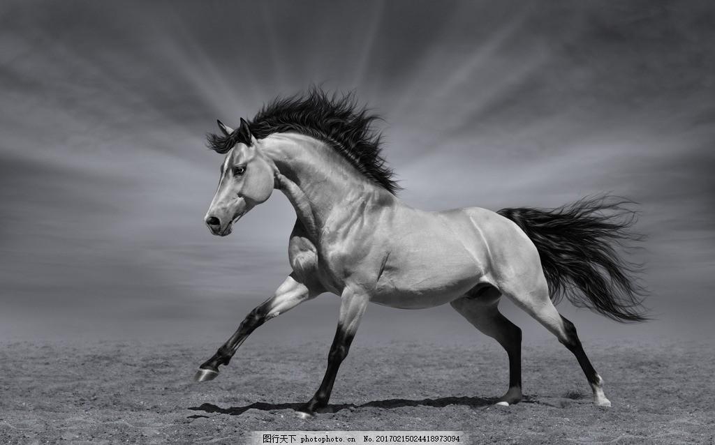 唯美 动物 可爱 野生 马 骏马 野马 千里马 马驹 千里名驹 马匹 摄影