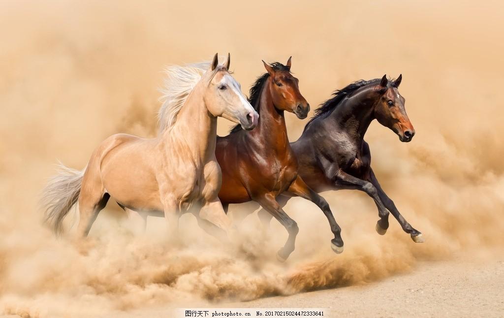 骏马 唯美 动物 可爱 野生 野马 千里马 马驹 千里名驹 马匹