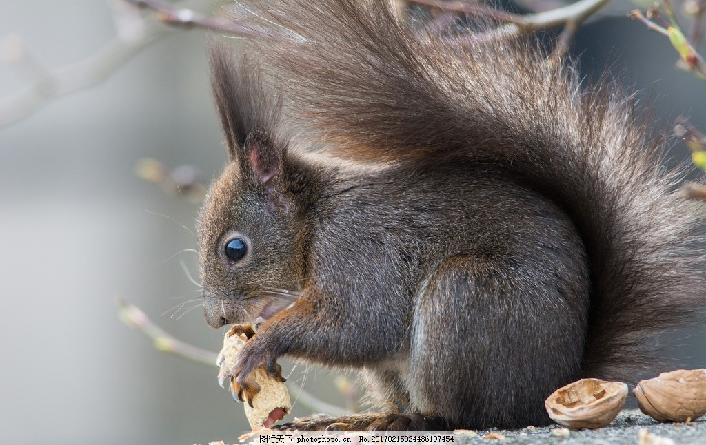 唯美 可爱 动物 松鼠 可爱松鼠 小松鼠 摄影 生物世界 野生动物 300