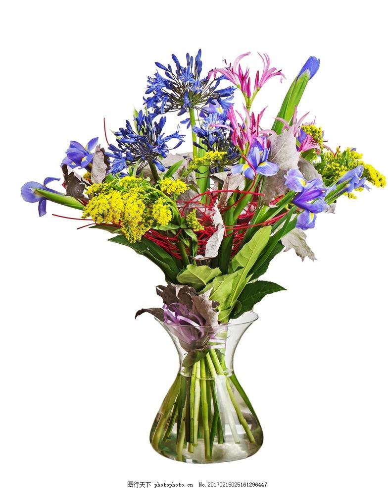 花盆 花卉 盆栽植物 小花 彩色 园艺 花背景