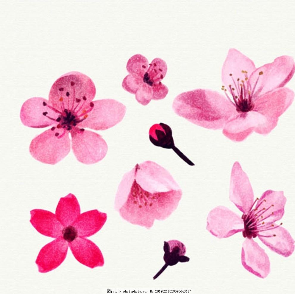 手绘水彩樱花花瓣插图