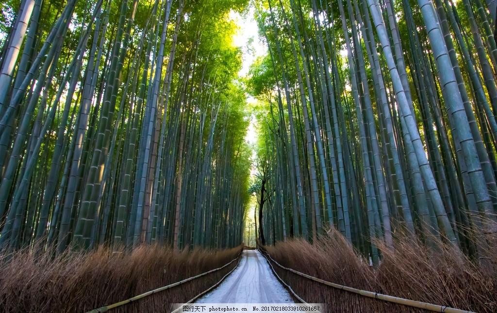 竹林景观手绘图片
