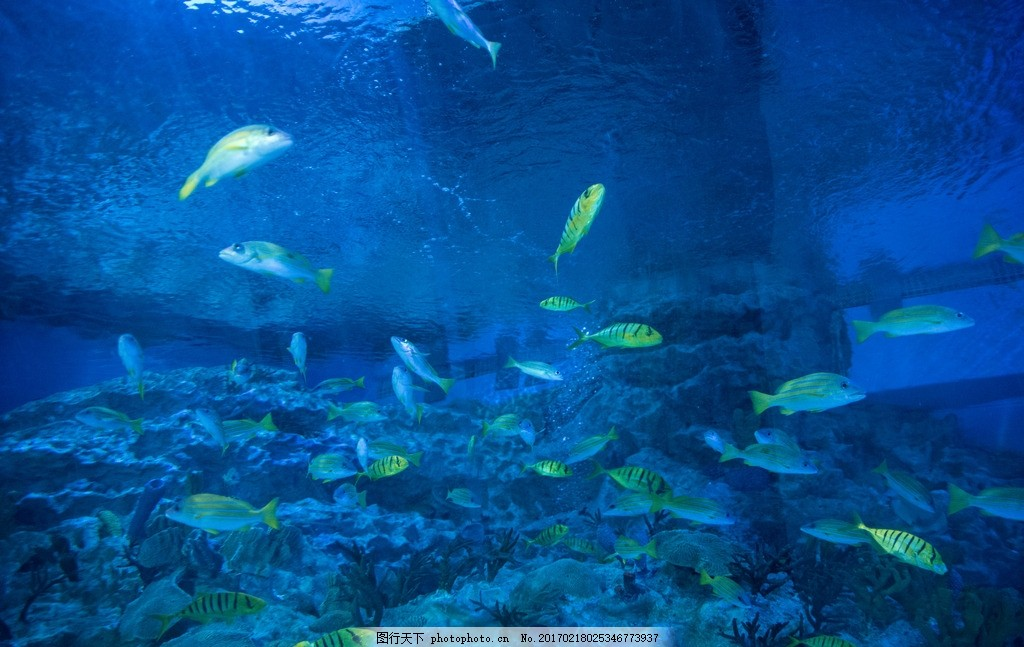 海洋馆 海底世界 鱼 海水 珊瑚 动物 摄影