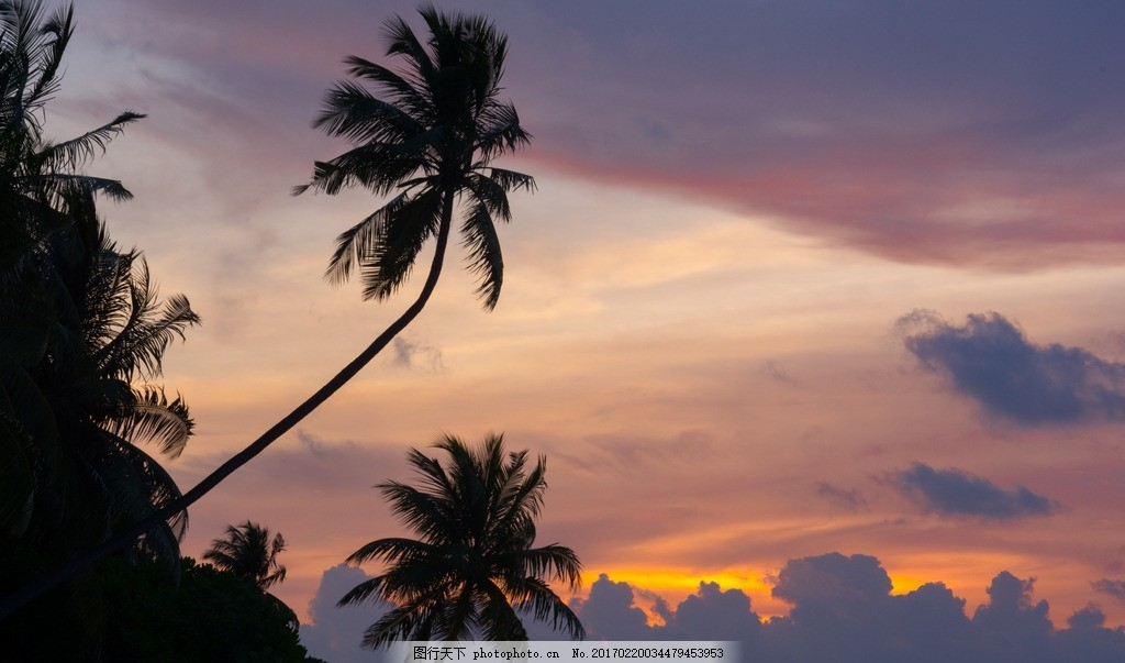 海边的椰子树,椰树 夕阳 海南 黄昏 摄影 自然风景-图