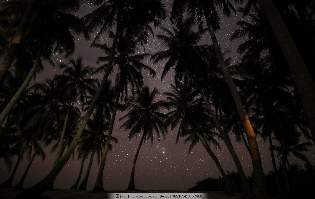 椰子树 晚上的椰子树 树丛 夜空下的树丛 椰子树剪影 摄影 自然景观