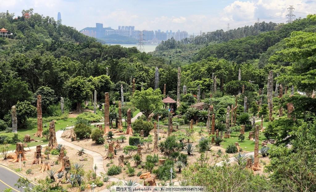 化石森林 仙湖植物园 深圳 公园 木化石 植物化石 树木化石 硅化木