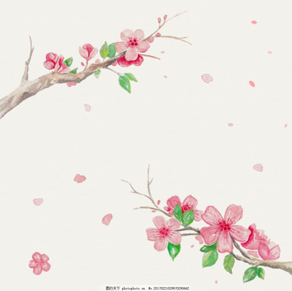 手绘水彩樱花花枝插图