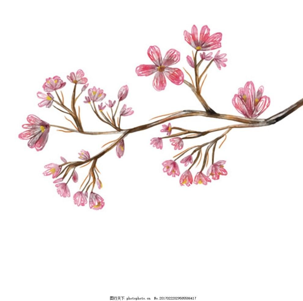 手绘水彩樱花花枝