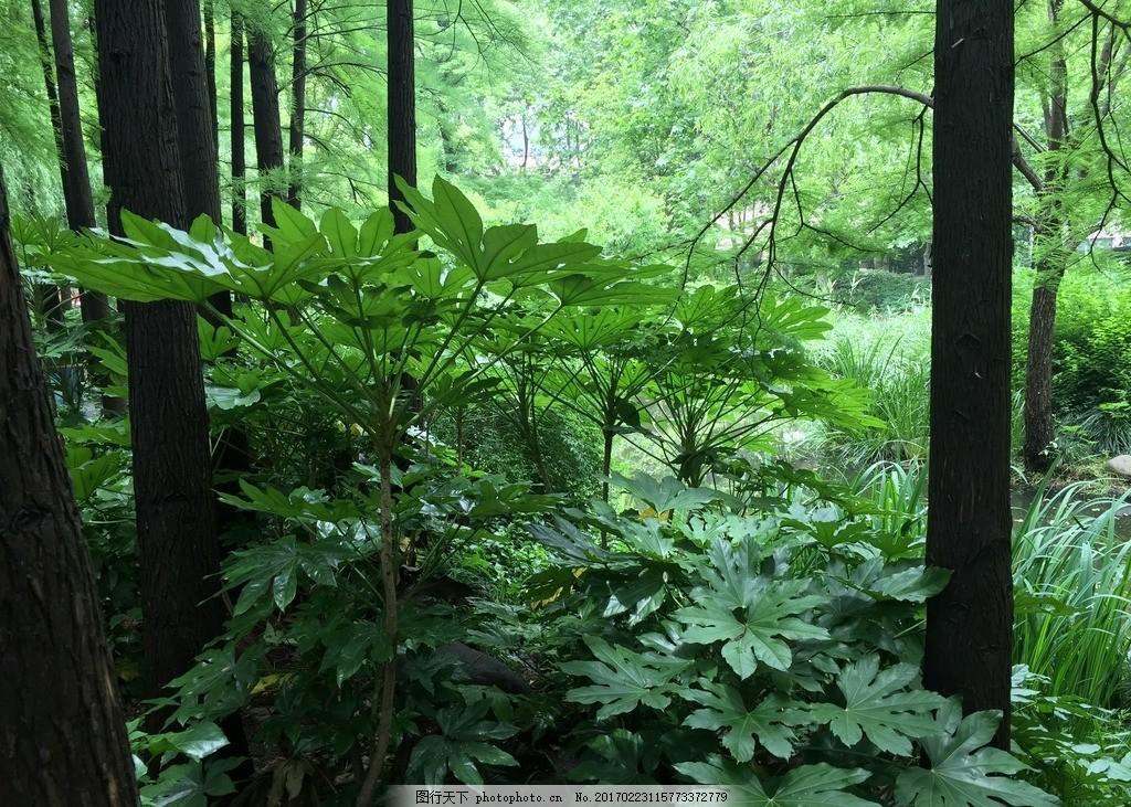 绿色树木 绿色 大树 绿植 植物 公园 摄影 自然景观 自然风景 72dpi