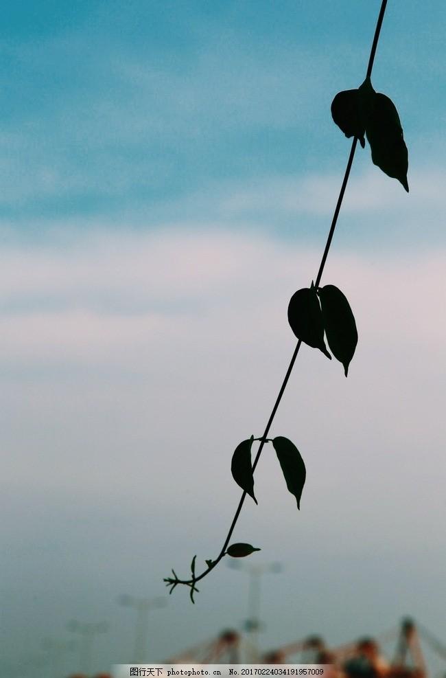 等风来 天空 树叶 文艺 夏天 小清新背景 风景 摄影
