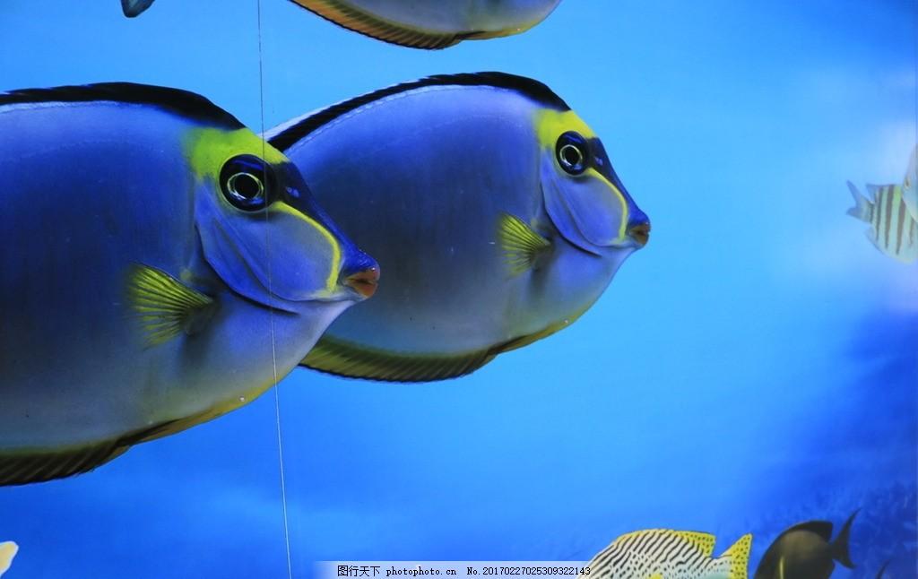 水族馆 热带鱼 泰国海底世界 暹罗海洋世界 海洋馆 摄影