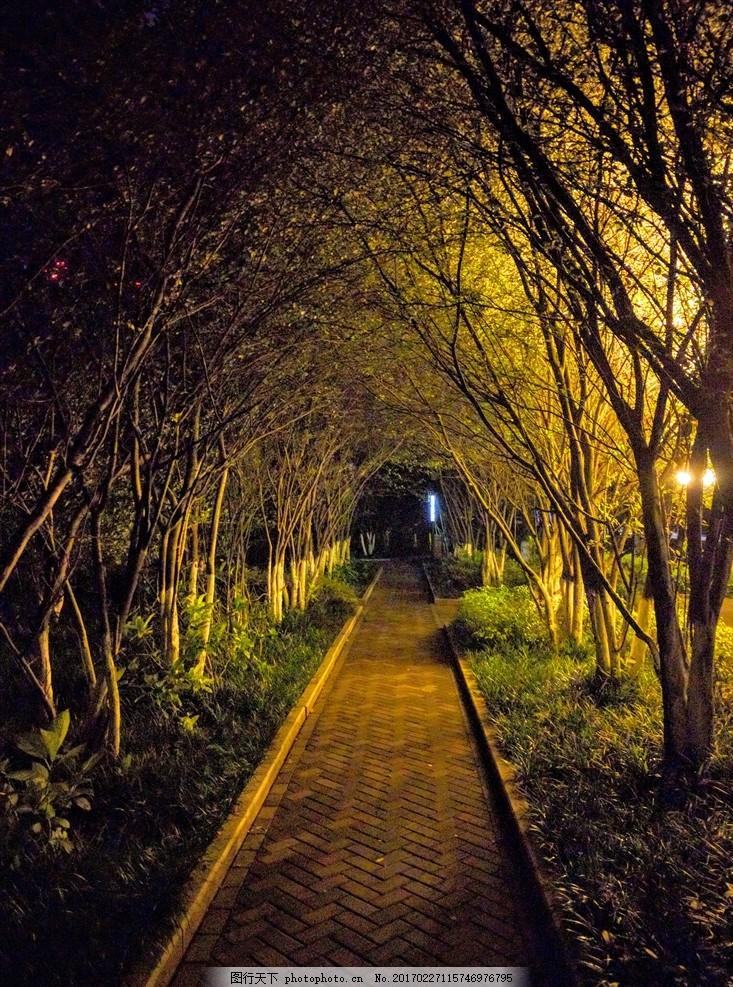 小树林 树荫 小路 两边树 意境 风景 灯火阑珊 夜晚 夜景 摄影