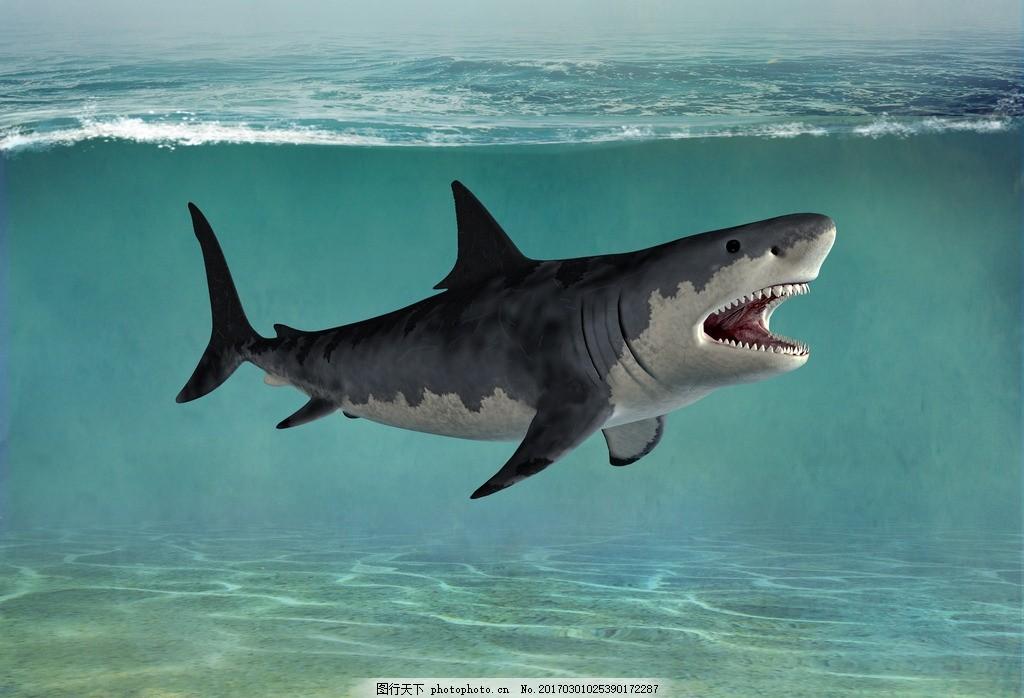 鲨鱼 血盆大口 水下怪物 海生动物 高清 摄影