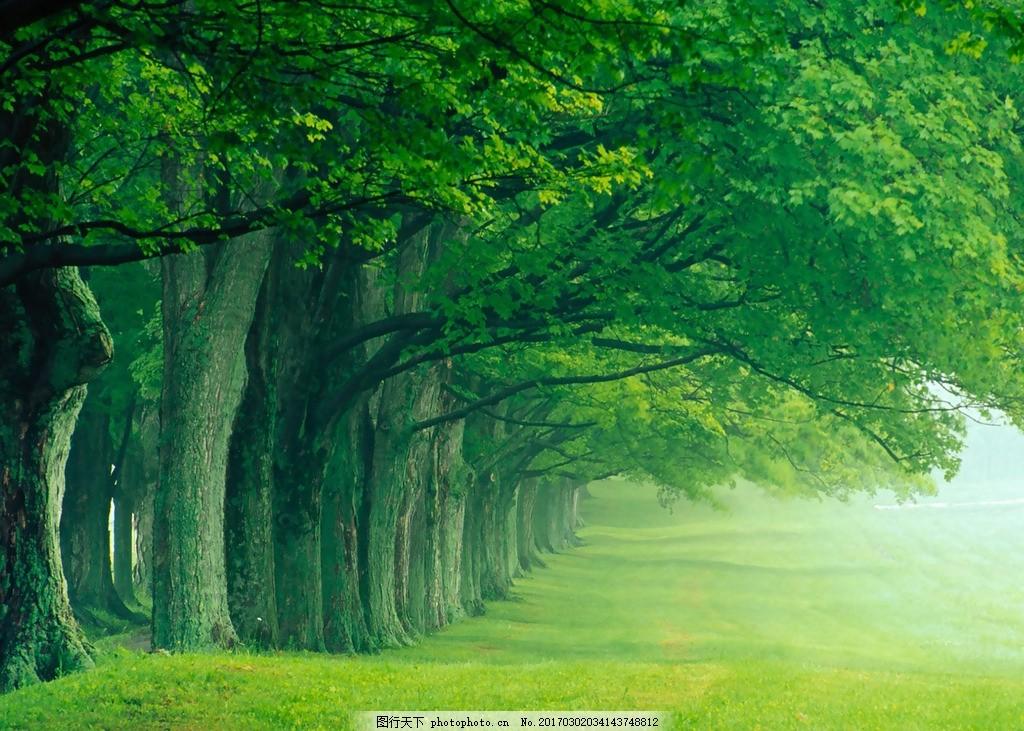 风景区 大自然 风光 林荫大道 森林 树林 摄影 自然景观 自然风景 72