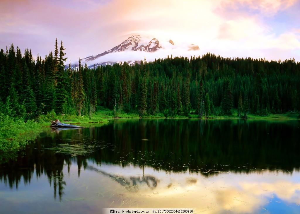 湖边的松树林 摄影 风景 风景区 大自然 风光 湖泊 松树林 摄影 自然