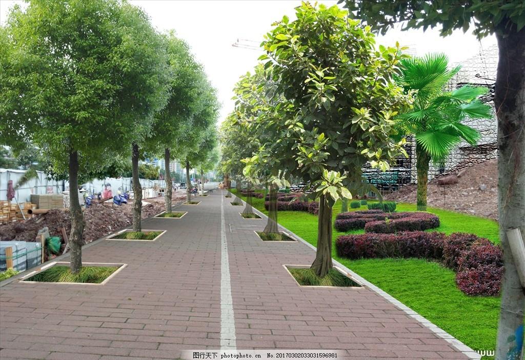 市政人行道绿化透视图 园林 景观 效果 道路 人视 铺装 植物