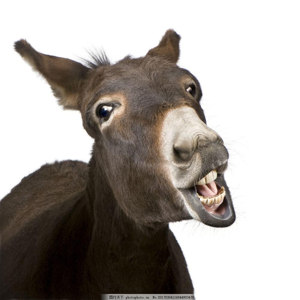 驴图片素材 可爱动物 动物世界 驴 陆地动物 生物世界 图片素材