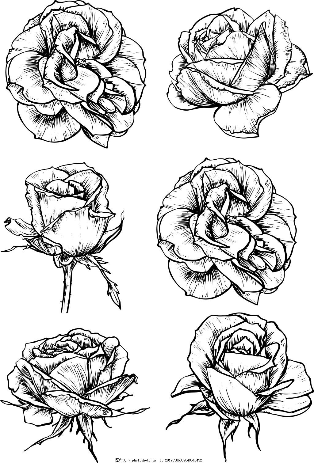 黑白手绘玫瑰花 植物