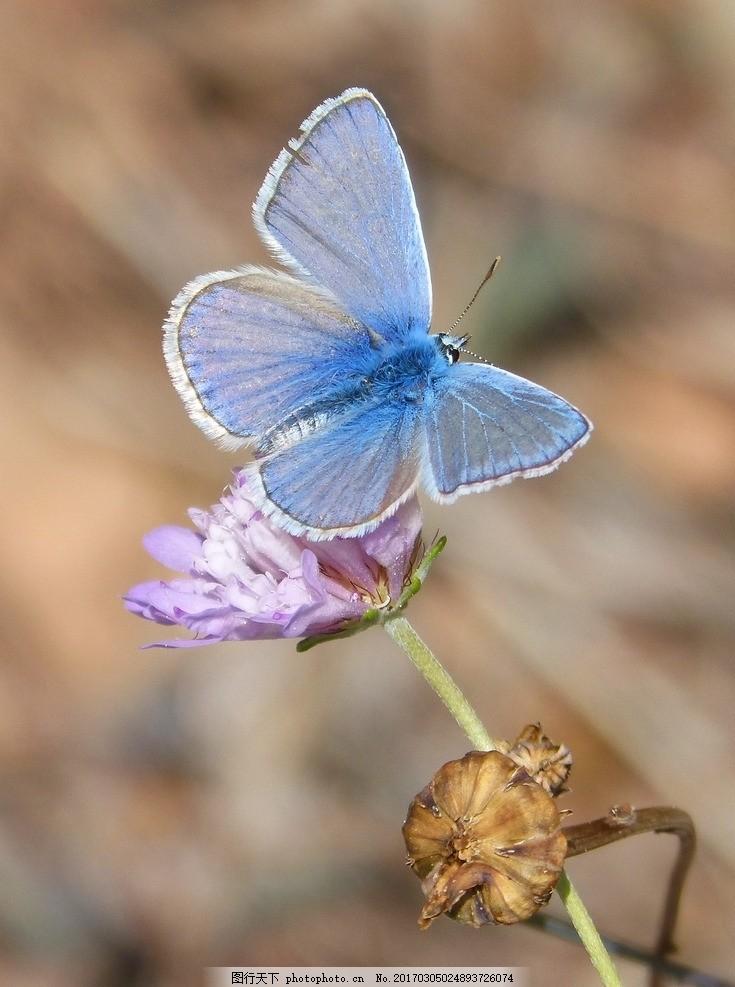 唯美 动物 生物 可爱 蝴蝶 蝶 可爱蝴蝶 摄影 生物世界 昆虫 300dpi
