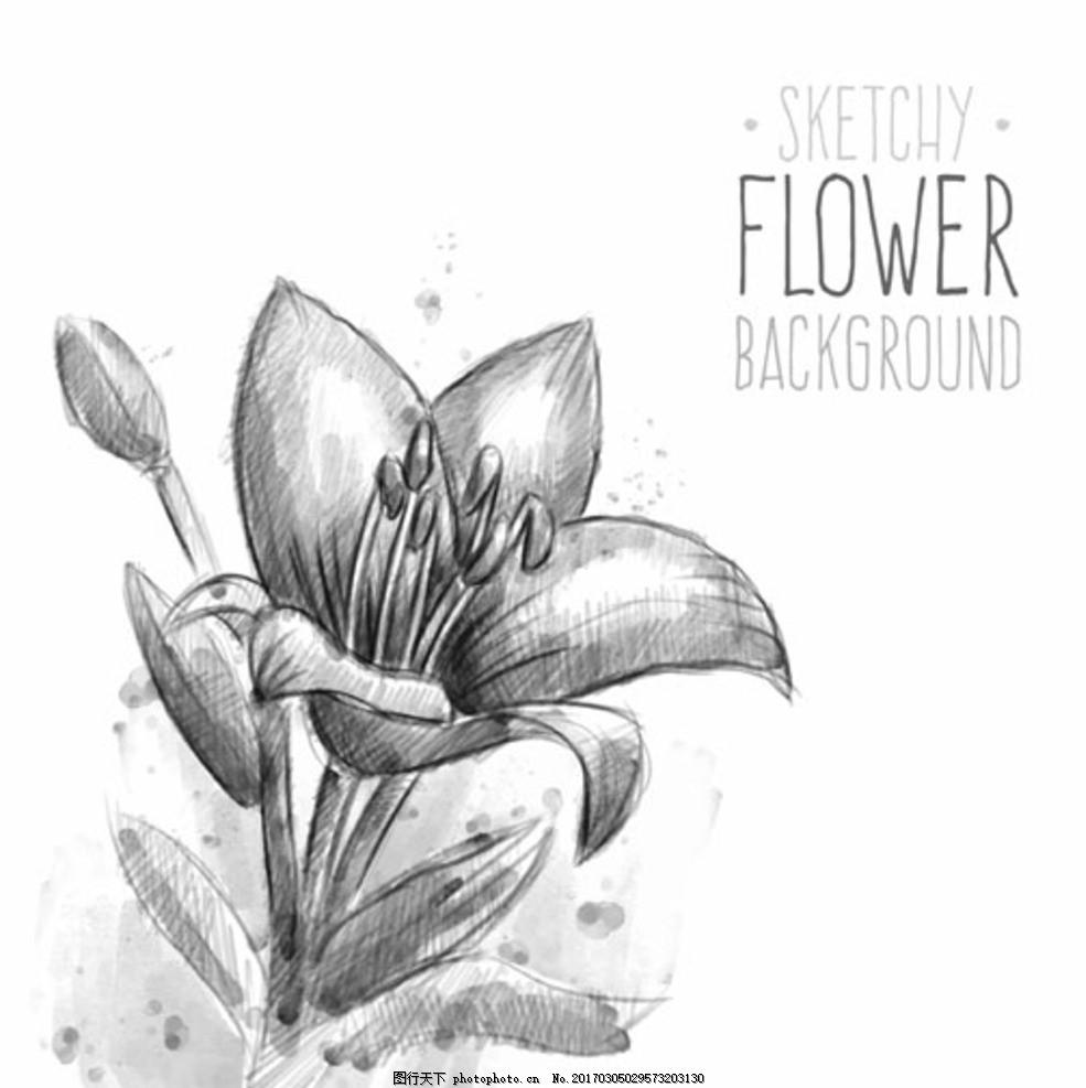 手绘素描春季花卉插图