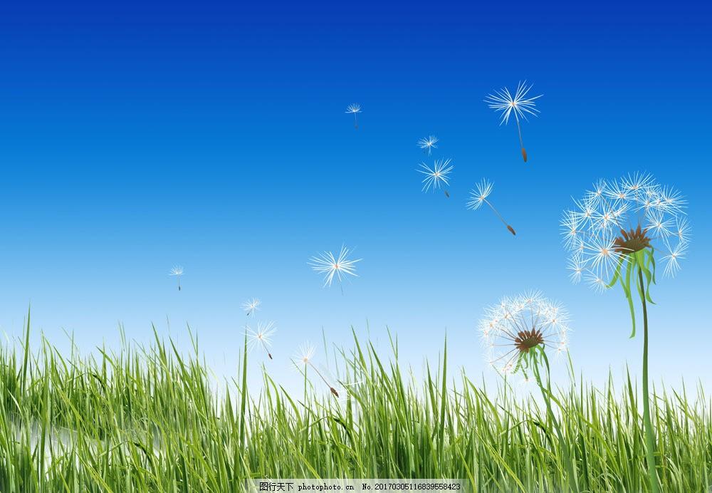 草地与蒲公英图片素材 草地 蒲公英 蓝天 天空背景 春天背景 春天风景