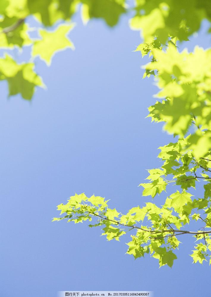 草地 绿色 jpg图片 草原主题 大自然 春天 生机盎然 碧绿的草地 风景