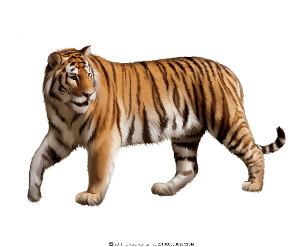 老虎 动物 猛兽 稀有动物 国家保护动物 动物之王 陆地动物 生物世界