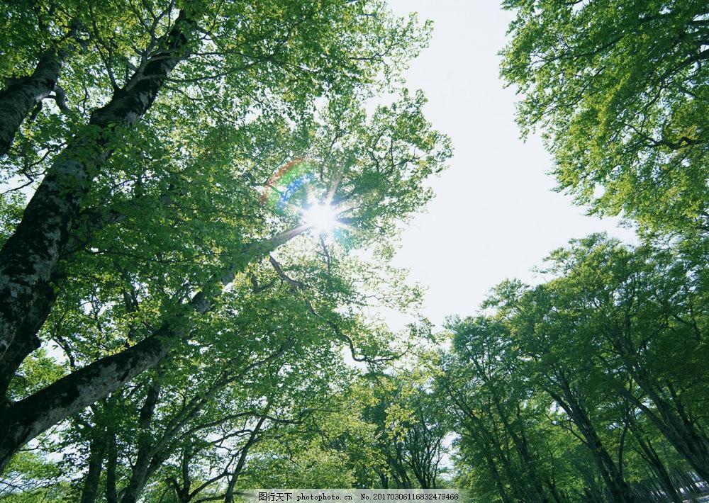 树林图片 森林树木图片164图片