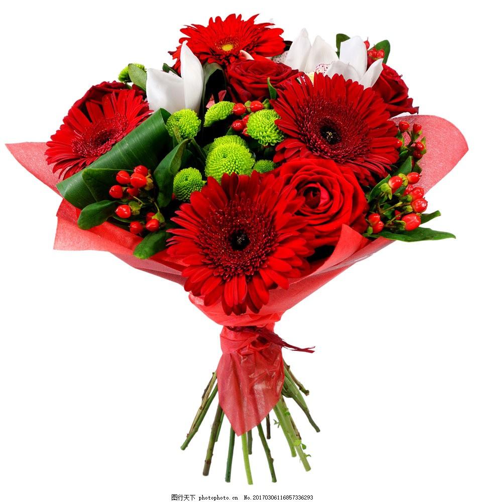 非洲菊花束 非洲菊花束图片素材 鲜艳花朵 美丽鲜花 漂亮花朵 花卉图片