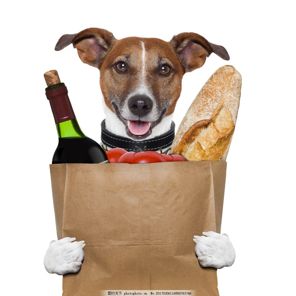 拿食物的小狗图片素材 面包 红酒 食物 小狗 小狗摄影 狗 宠物 动物