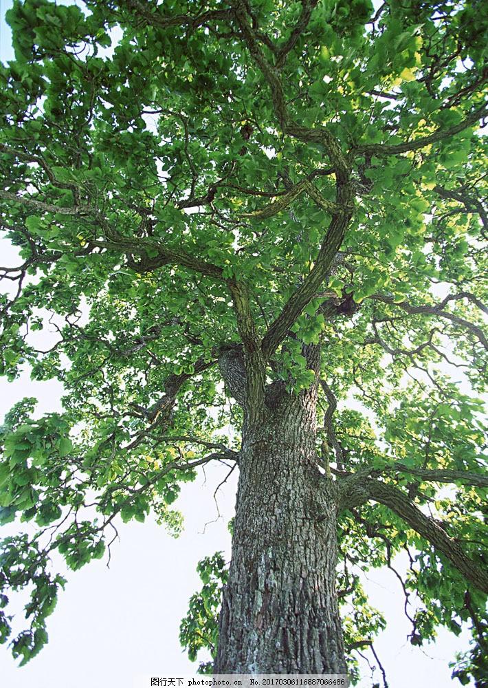 大树树根图片素材 自然 风景 树根 树林 森林 大树 阳光 花草树木