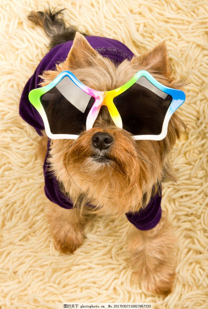 可爱小狗图片素材 可爱狗狗 宠物狗 小狗 可爱动物 戴眼镜的狗 狗狗图