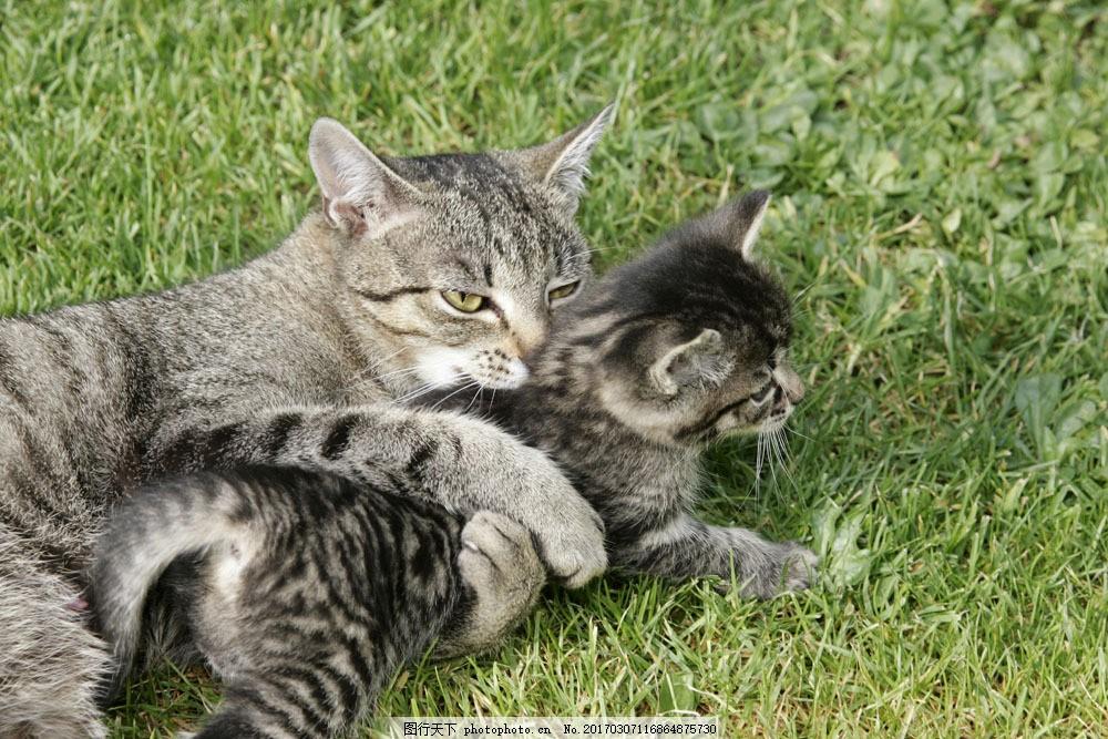 可爱猫咪图片素材 草地 猫咪 可爱 小猫 宠物 动物世界 摄影图 猫咪